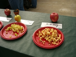 apple festival apples.JPG