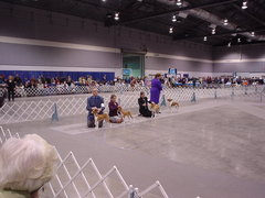 dog show bs showing.JPG