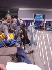 dog show greyhound.JPG