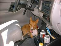 hot dog in truck.jpg